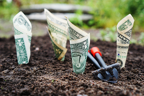 dollar bills planted in ground like seeds
